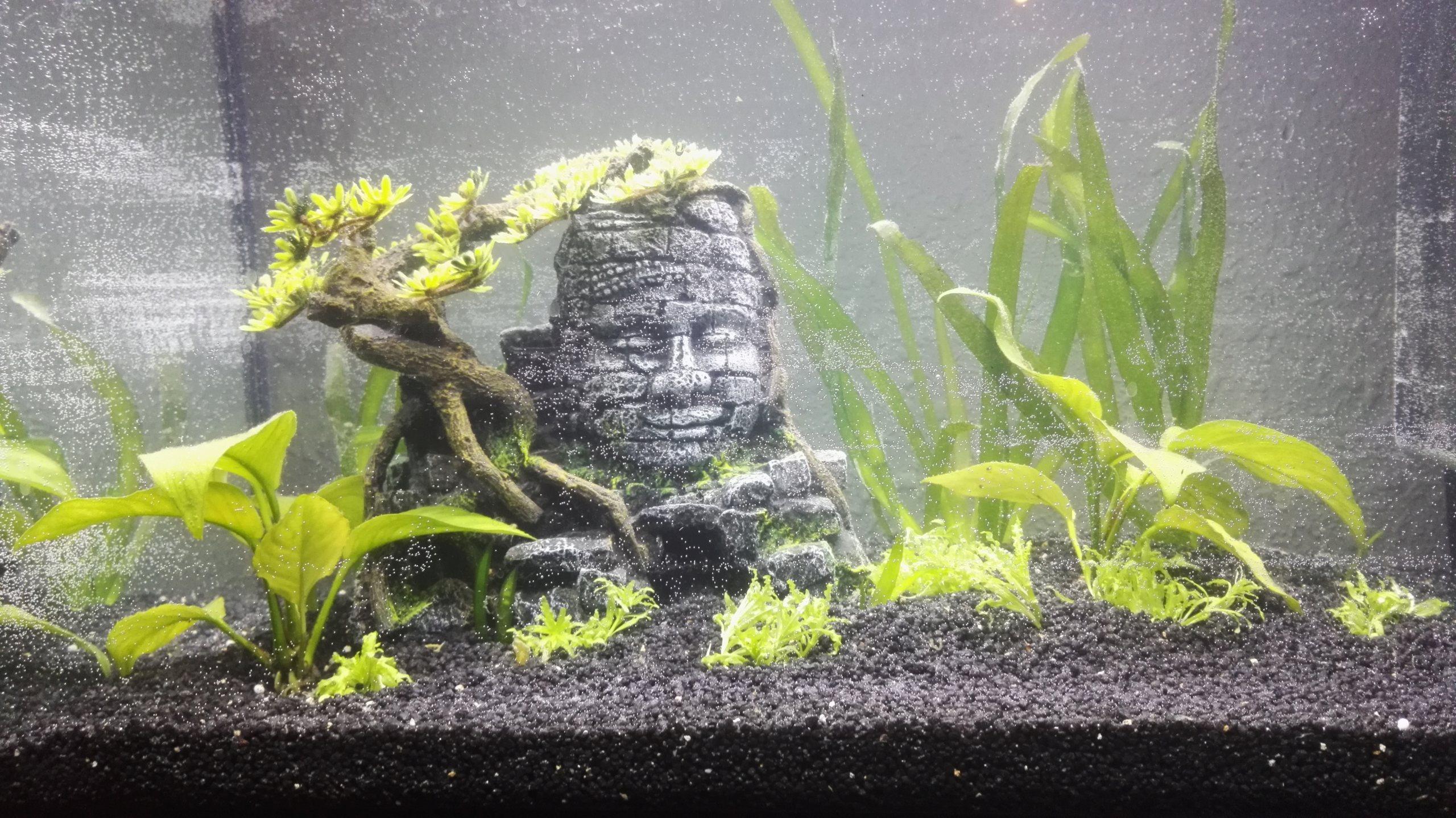Aquarium 70l Img_2014