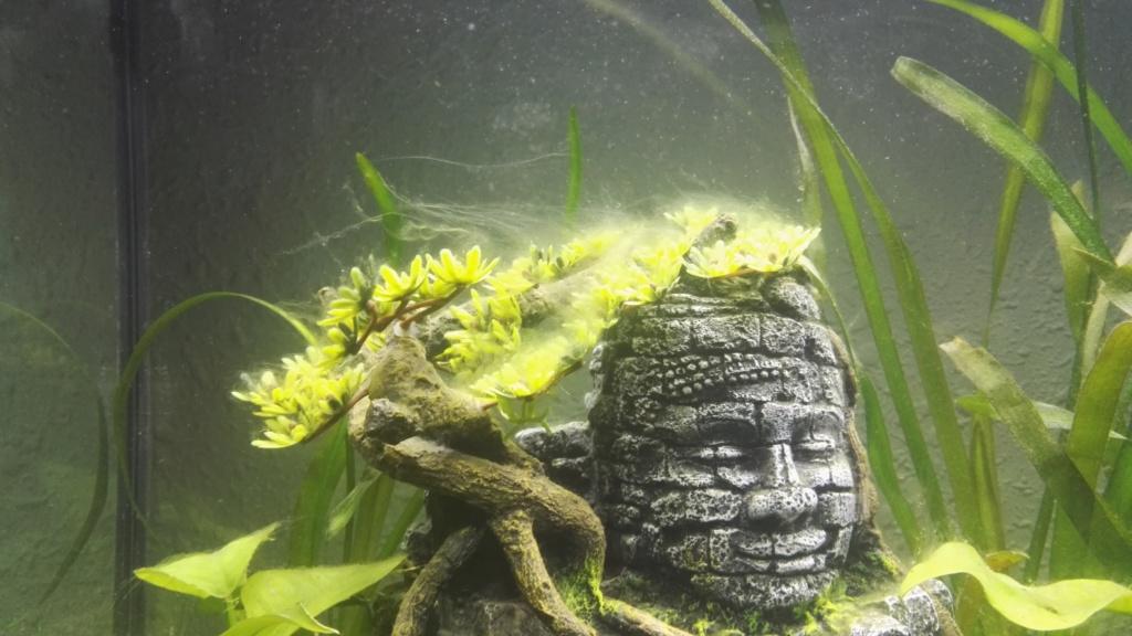 Aquarium 70l Img_2016