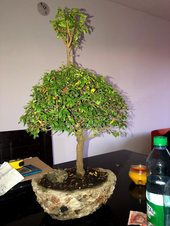 Mi bonsai. Qué me recomiendan. Img_4410