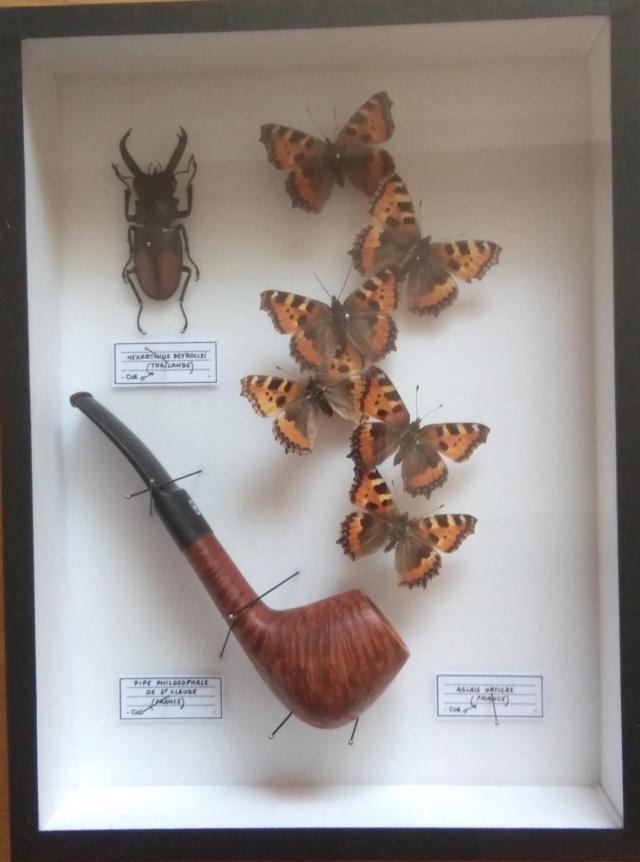 Pipa entomologica Img_2012