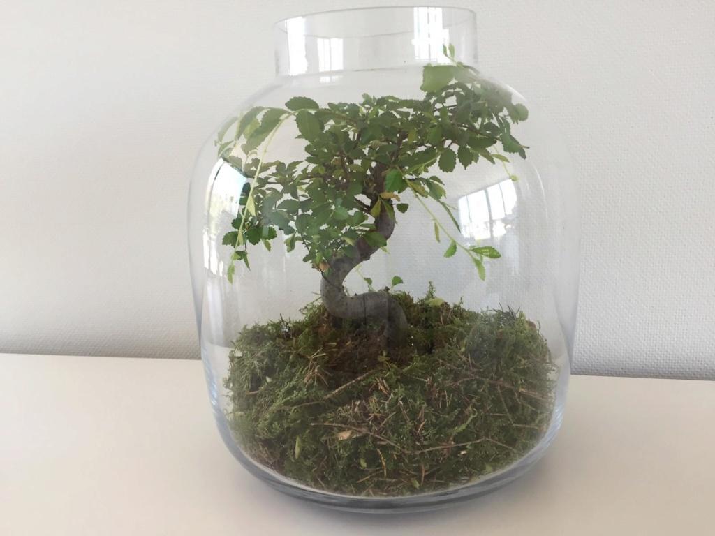 Bonsai enfermo sin hojas ayuda 110