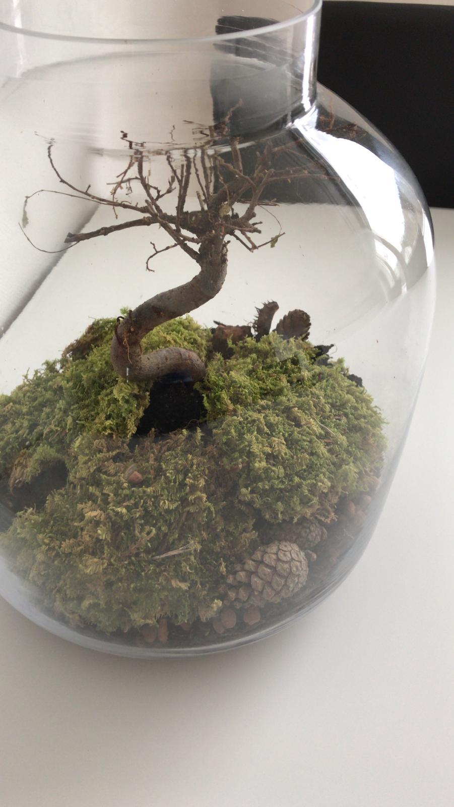 Bonsai enfermo sin hojas ayuda 310