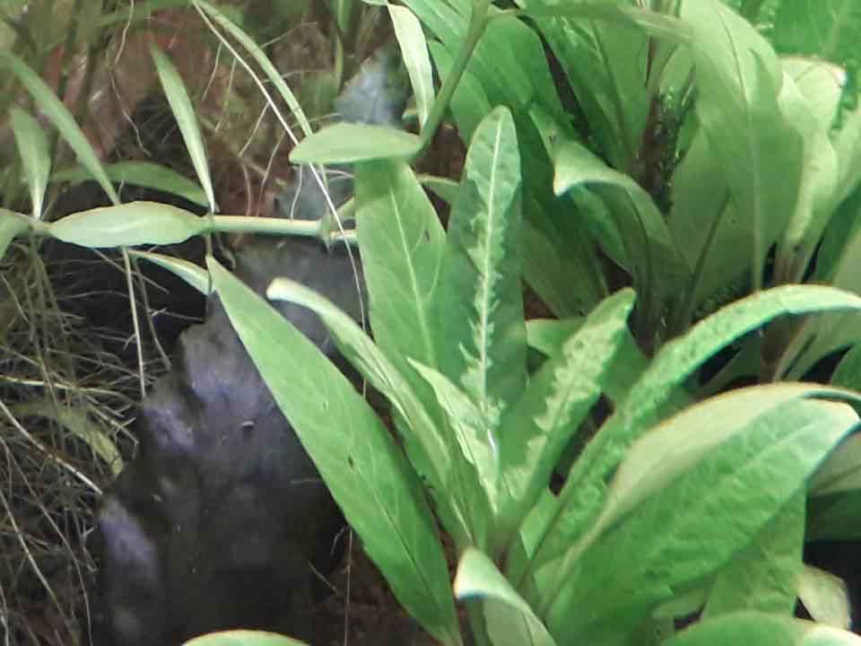 Problèmes sur deux types de plantes. Hygrop12