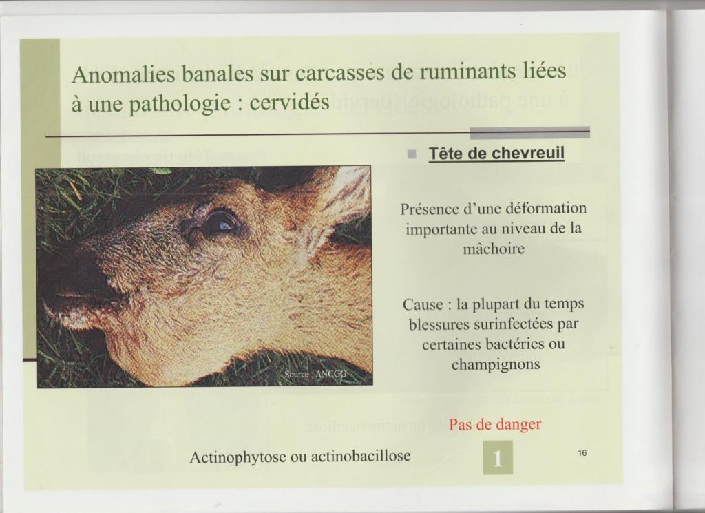 Dossier Hygiène et traitement de la venaison Hy01511