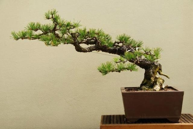qualche idea per questo juniperus Stili-10