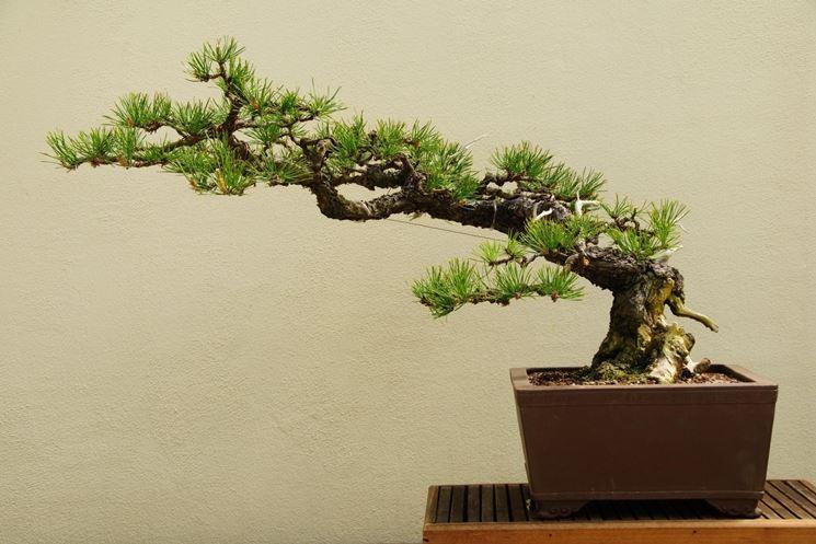 un juniperus interessante Stili-11