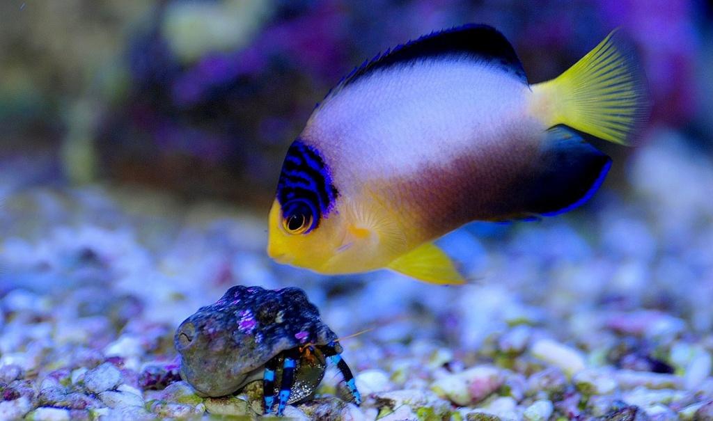 photos de poissons et coraux  Dsc_8912