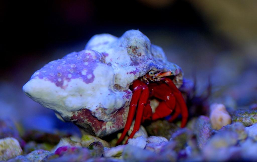 photos de poissons et coraux  Dsc_8913
