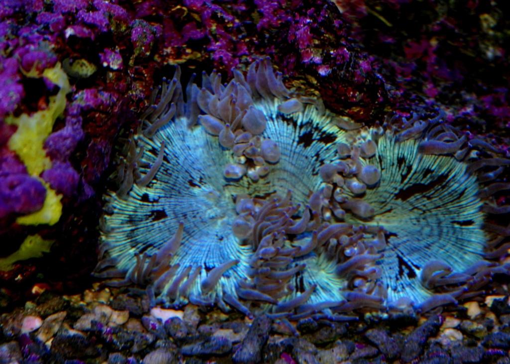 photos de poissons et coraux  - Page 5 Dsc_9110