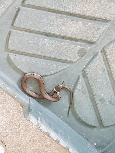 je cherche ce que c'est ce serpent  20190810
