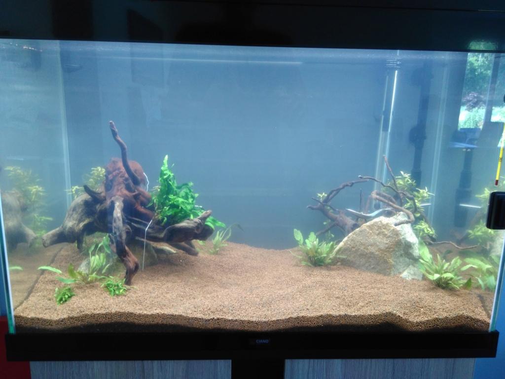 120l asiatique : mon premier aquarium Img_2020
