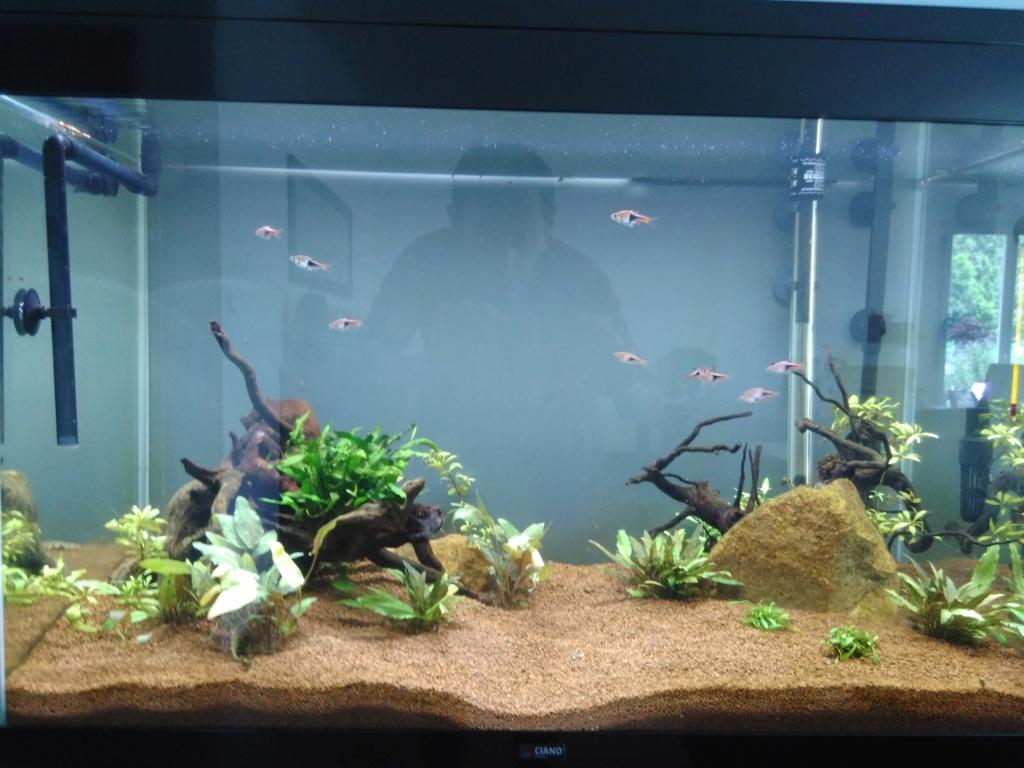 120l asiatique : mon premier aquarium Img_2021