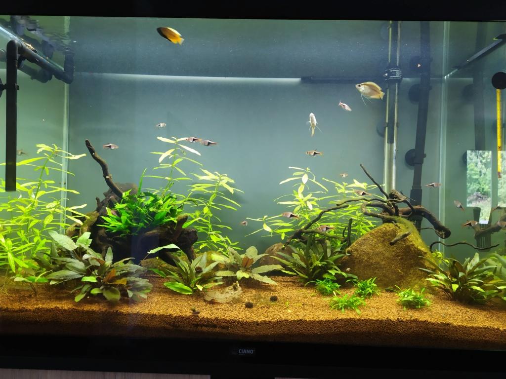 120l asiatique : mon premier aquarium Img_2023