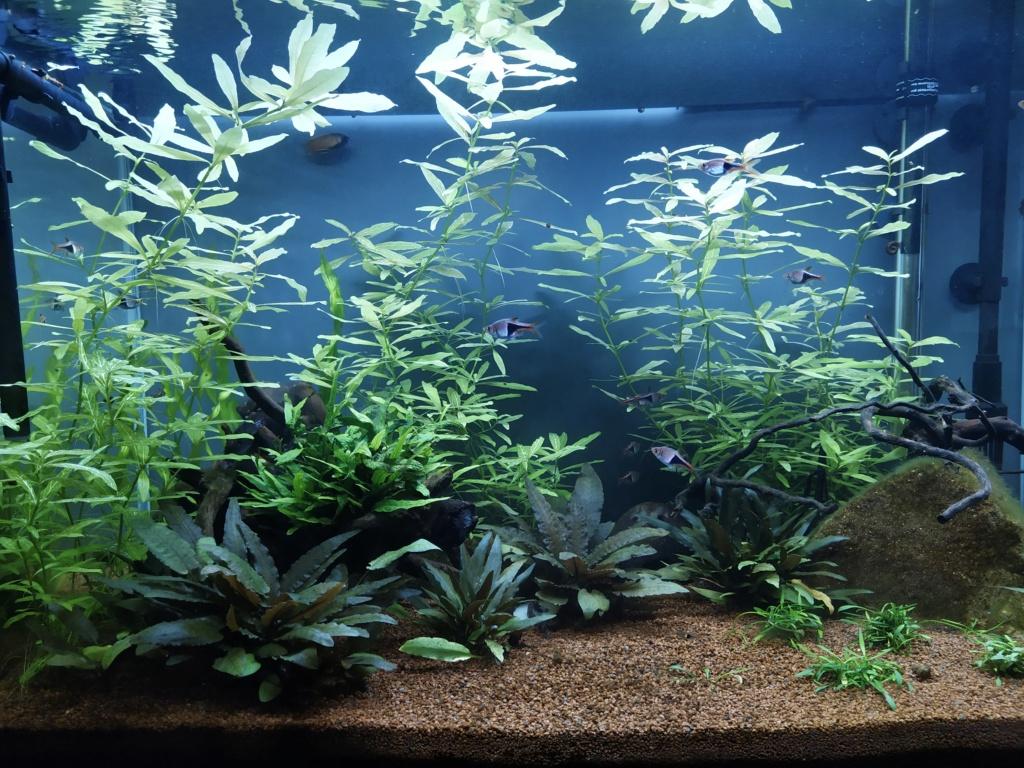 120l asiatique : mon premier aquarium Img_2024