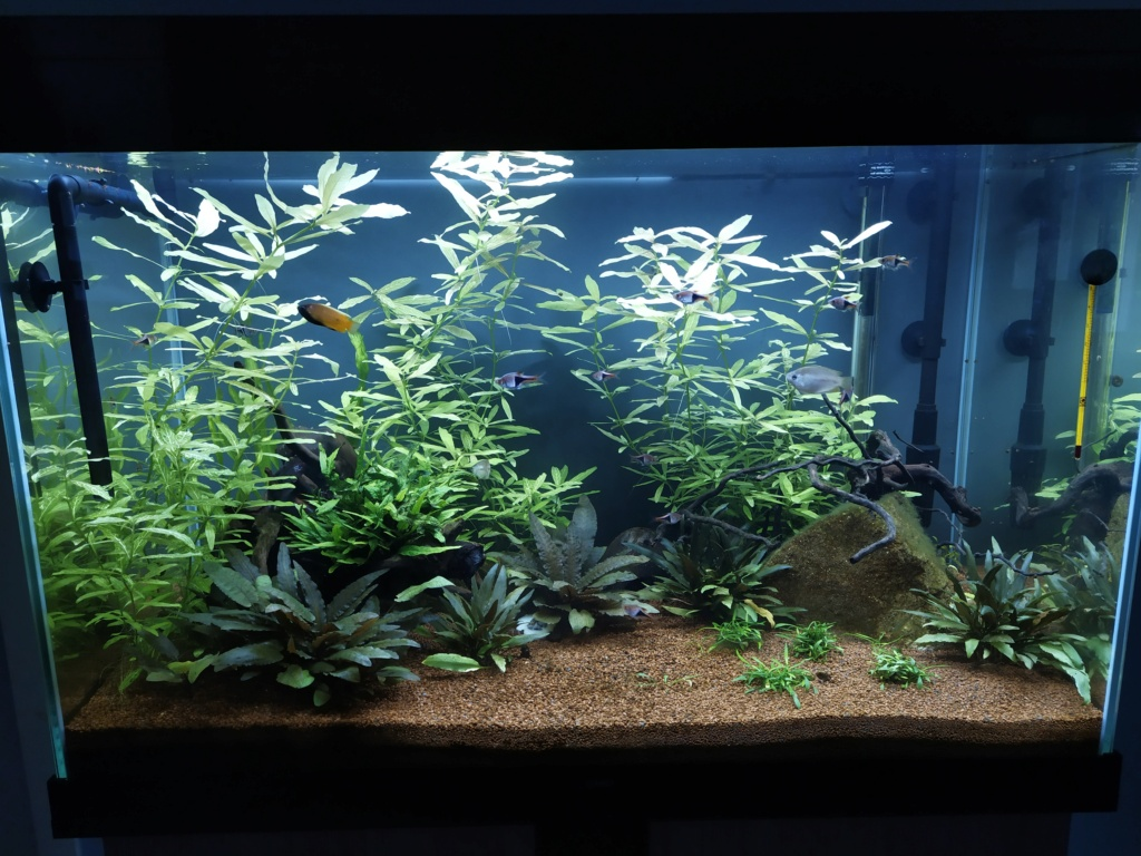120l asiatique : mon premier aquarium Img_2025