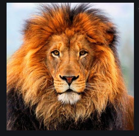 [C.M] Présentation de Demba9380 Lion10