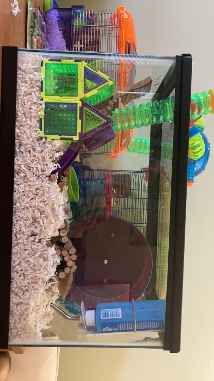 my mice cage set up.  2dc2f610