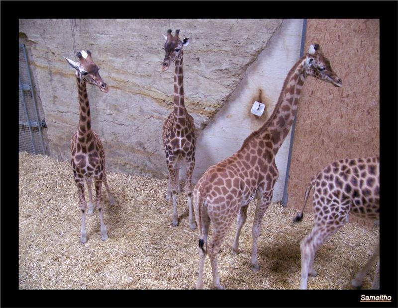 Le Zoo de Doué-la-Fontaine La_fle14