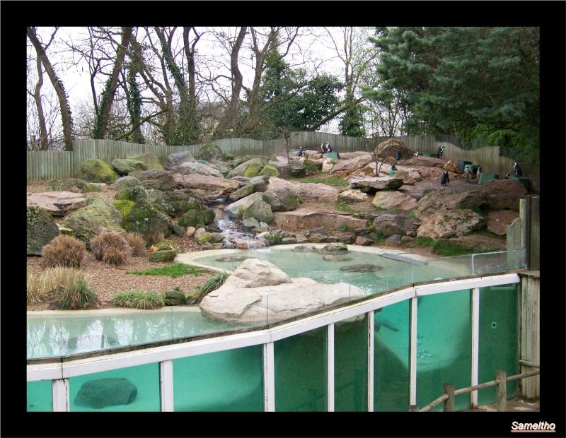 Le Zoo de Doué-la-Fontaine La_fle17