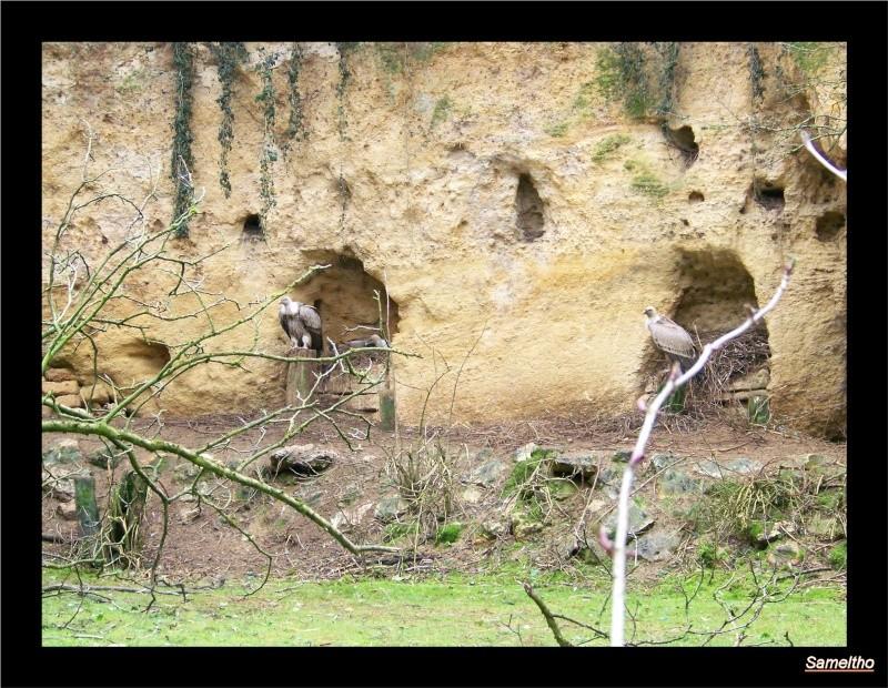 Le Zoo de Doué-la-Fontaine La_fle18