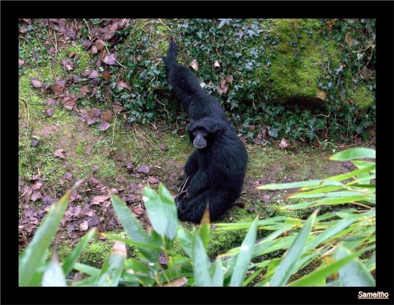 Le Zoo de Doué-la-Fontaine La_fle21