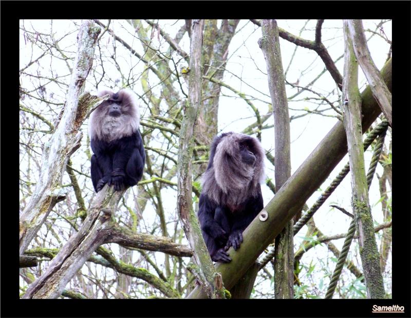 Le Zoo de Doué-la-Fontaine La_fle24