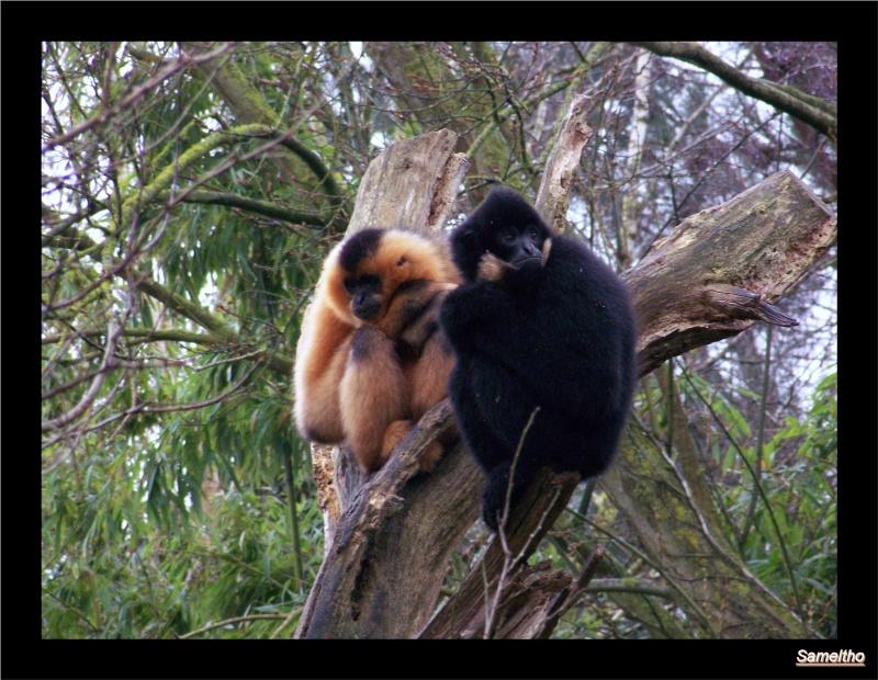 Le Zoo de Doué-la-Fontaine La_fle25