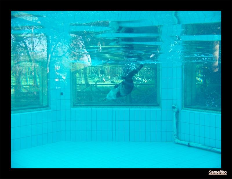 Le zoo de la fleche La_fle34