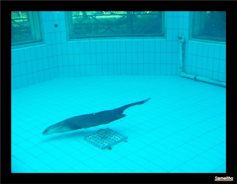 Le zoo de la fleche La_fle35