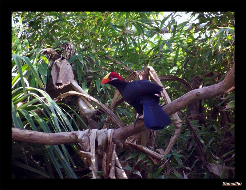 Le zoo de la fleche La_fle36