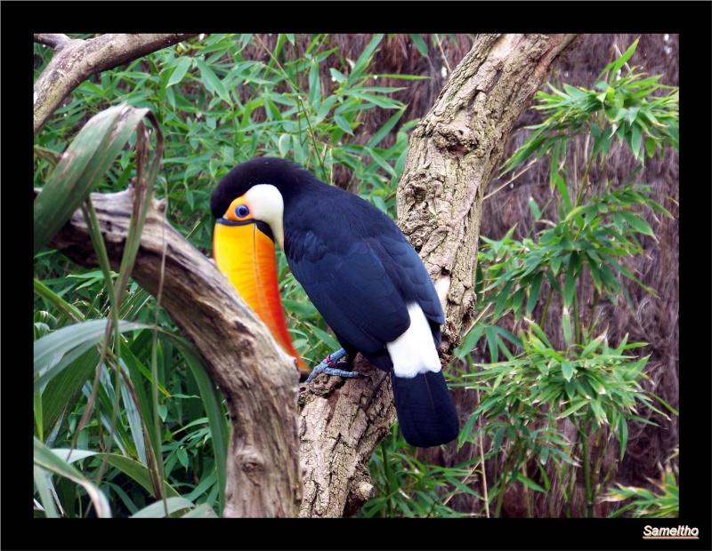 Le zoo de la fleche La_fle47