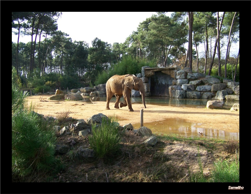 Le zoo de la fleche La_fle59