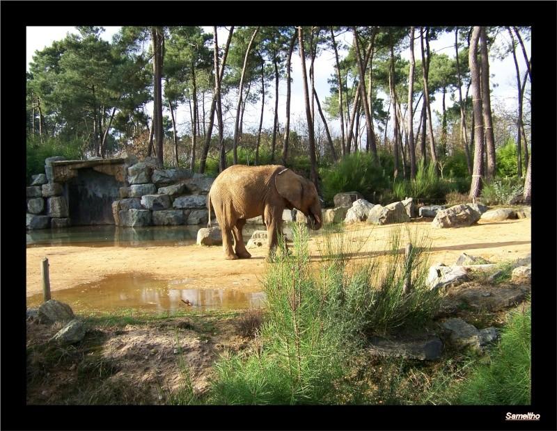 Le zoo de la fleche La_fle60