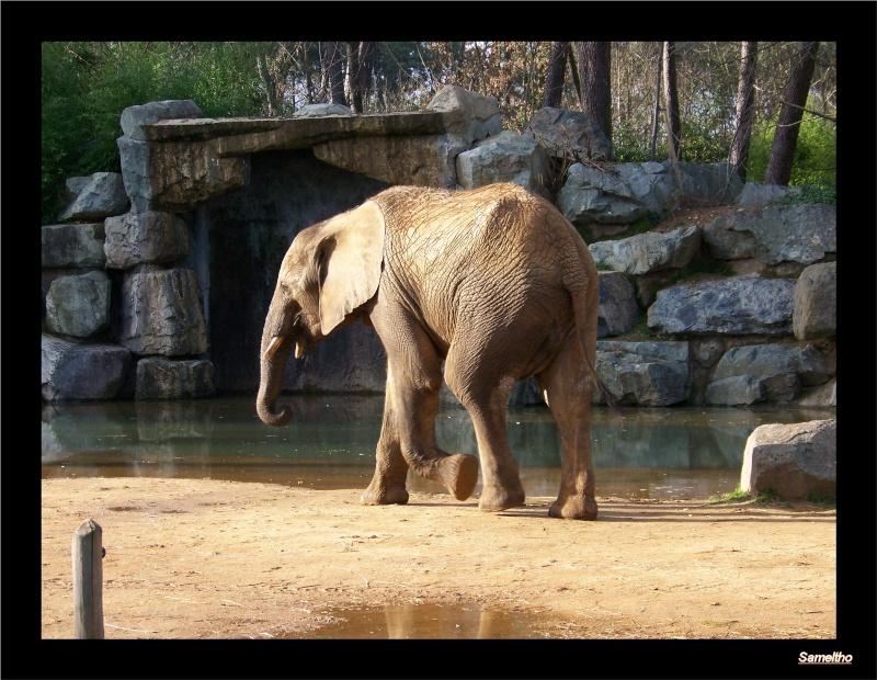 Le zoo de la fleche La_fle62