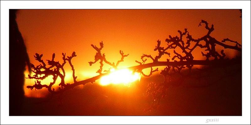 coucher de soleil - Page 2 22020825