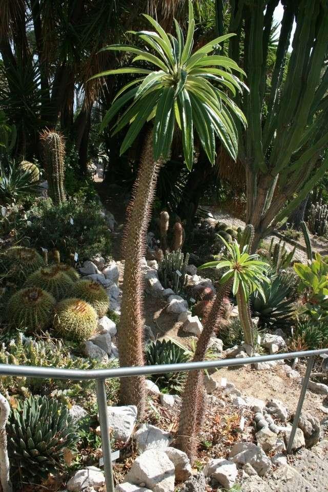 Site VPC californien Pachyp10