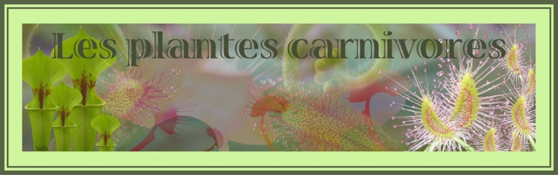 les plantes carnivores