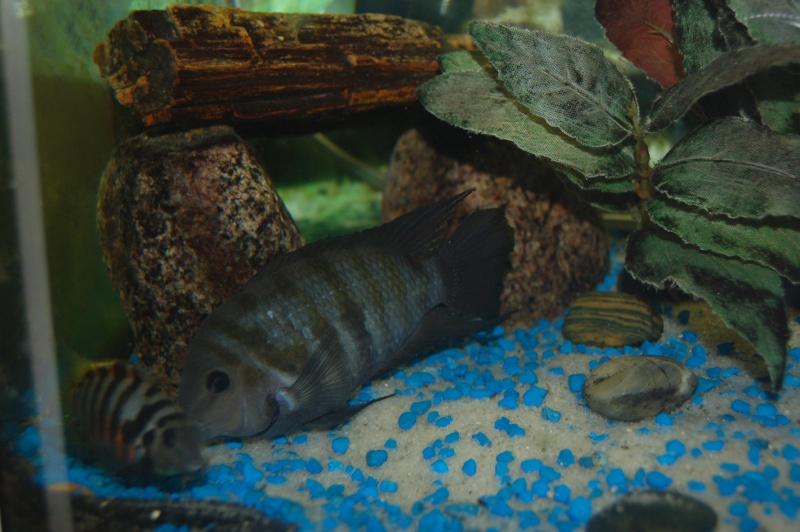 Mes nouveaux poissons sont arriver 04310