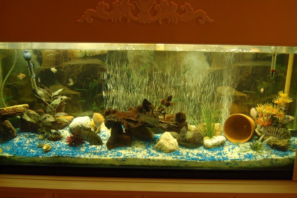 Mes nouveaux poissons sont arriver 07311
