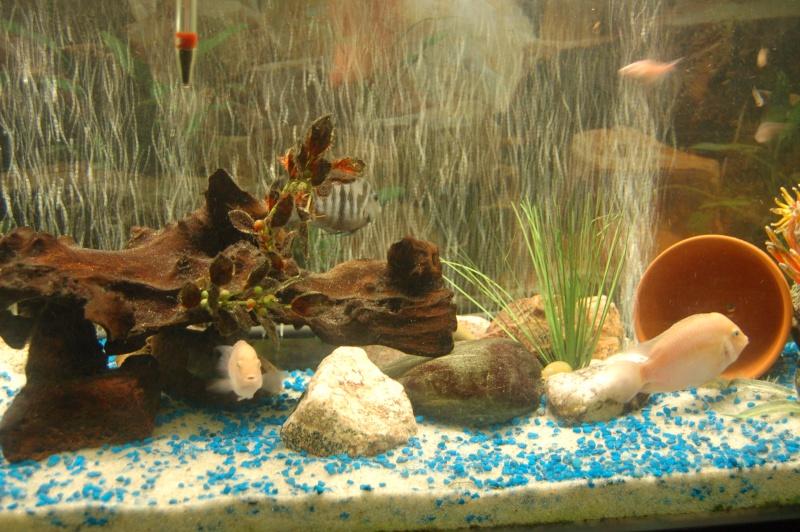 Mes nouveaux poissons sont arriver 08811