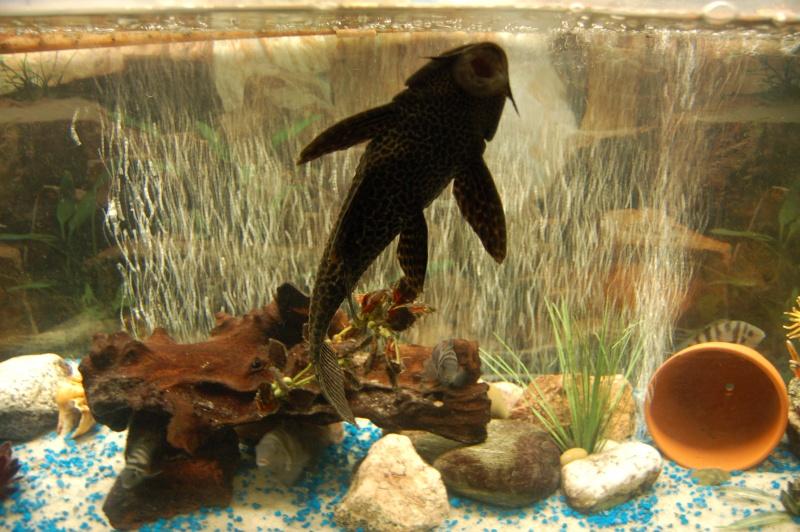 Mes nouveaux poissons sont arriver 11111