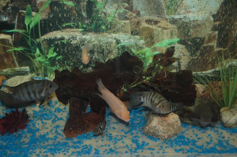 Mes nouveaux poissons sont arriver 19811
