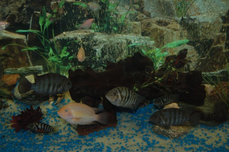 Mes nouveaux poissons sont arriver 19911