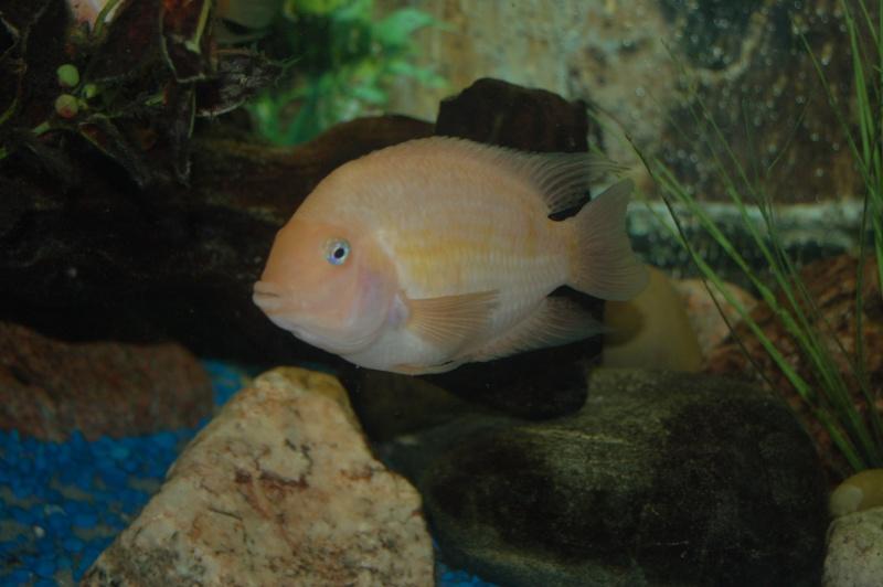 Mes nouveaux poissons sont arriver 23312