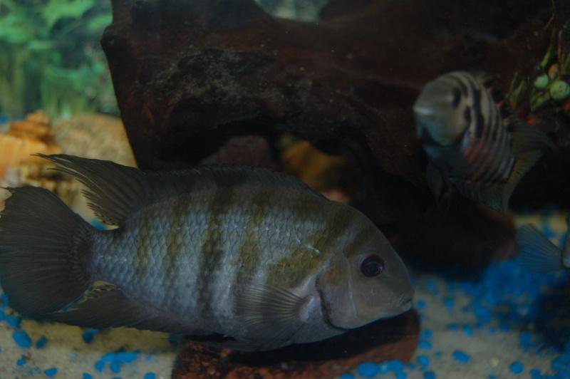 Mes nouveaux poissons sont arriver 25212