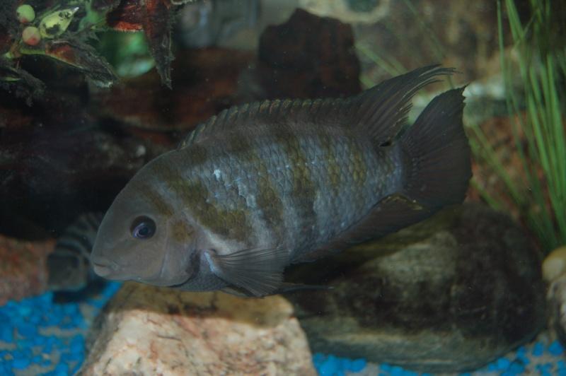 Mes nouveaux poissons sont arriver 26410