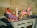 [BARBIE] Une partie de mes Barbies p1 et surtout mes CHEVAUX ! Traine13