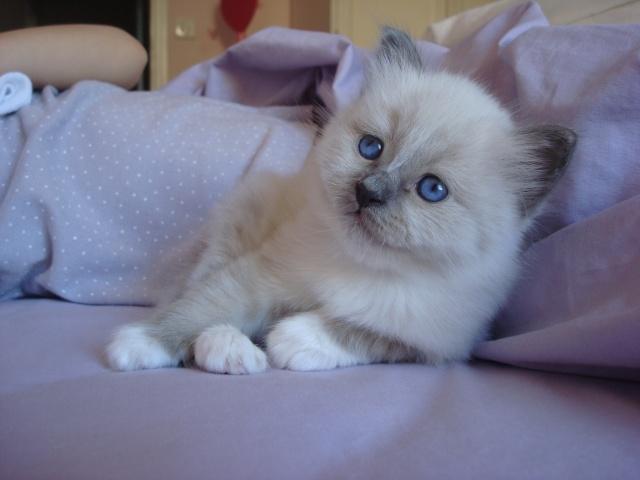 Le chaton unique de Geisha et Gulli est né ! - Page 2 Dsc04610