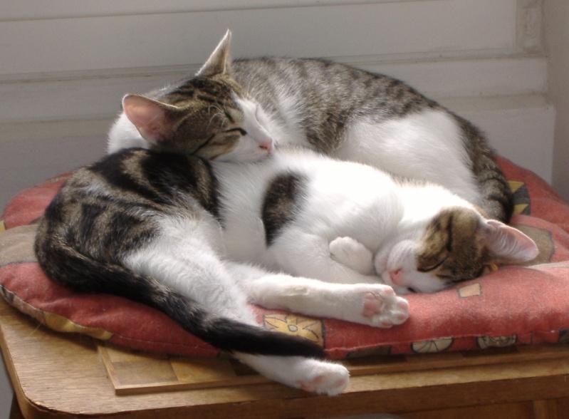 Lino et Nolan, chatons nés le 1er avril, sauvetage suite à expulsion dans le 60 Dscf3810