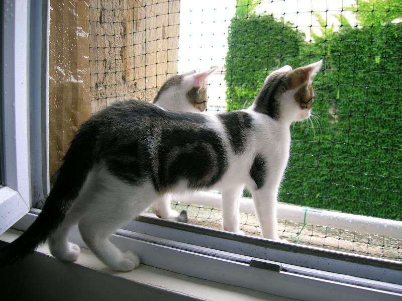 Lino et Nolan, chatons nés le 1er avril, sauvetage suite à expulsion dans le 60 Dscn1010